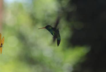 humming bird psycho by ssfialho