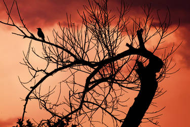 i think i saw a bird by ssfialho