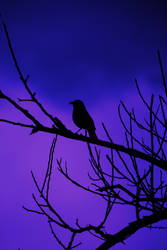 I once was a bird by ssfialho