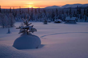 January by janip