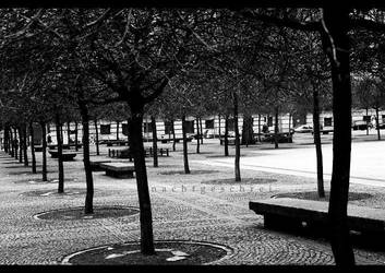 If these trees could talk. by nachtgeschrei