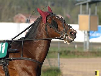 Harness racing 3 by wakedeadman