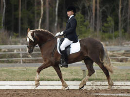 Welsh cob mare by wakedeadman