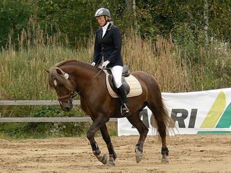 Stallion 19 by wakedeadman