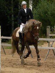 Stallion by wakedeadman