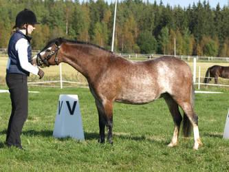 Welsh mare by wakedeadman