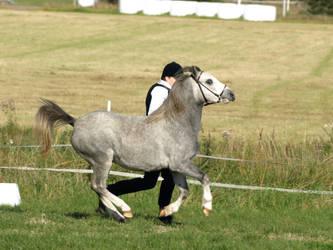 Welsh mountain mare by wakedeadman