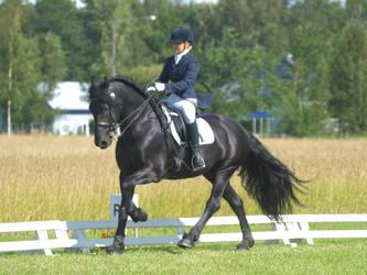 friesian stallion, dressage august6 by wakedeadman