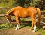 Horse of Fire by Okarnillart