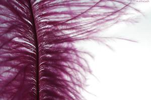 Pink Feather .1. by Tissoz
