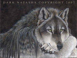 Lakota by darknatasha