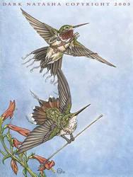 Humming bird warriors by darknatasha