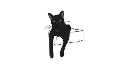 Cat - Peekaboo, Black Shorthair by Nailkita