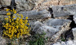 Yellow Flowers and Selenite by wondrousbutstrange