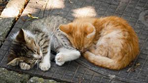 Sleeping Kitties by JoeGP