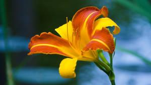 Flower 1 by JoeGP