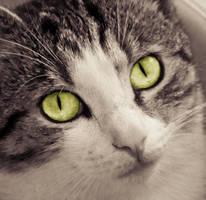 Look into my eyes... by JoeGP