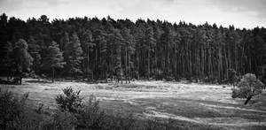 Forest Pano by JoeGP