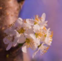 Flowering Tree 1 by JoeGP