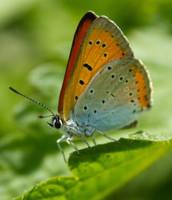 Butterfly by JoeGP