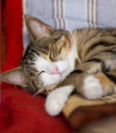Sleeping Kity by JoeGP
