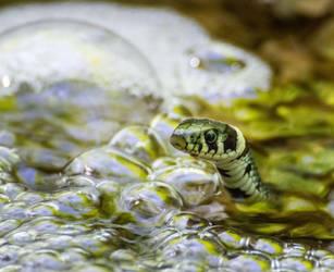 Garden Snake by JoeGP