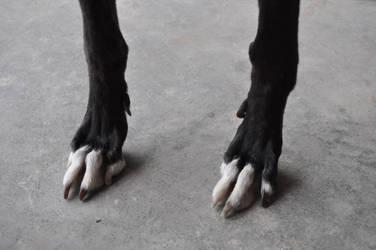 Sighthound Paw Reference 3 by tuketi