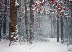 Snowfall by KimJSinclair