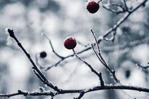 Frozen by KimJSinclair