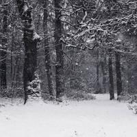 Snow - I by KimJSinclair