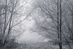 Fog by KimJSinclair