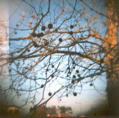 Autumn Pure Breeze by ASofia