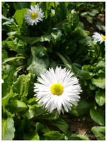 Pure White by ASofia