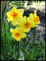 Finally Spring by ASofia
