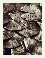 Waterlilies of Doom by ASofia