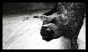 Hedgehog by daphotos