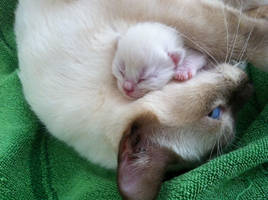 Mama's Love by SULTRYBABY