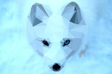 Low Poly Arctic Fox - Vairon by ElodieCarpentier