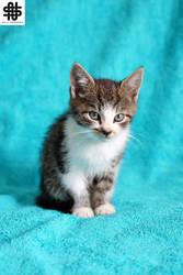 Little Kittens VI by nellasgraphics