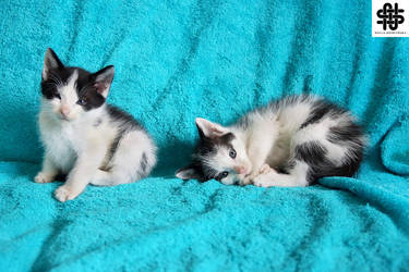 Little Kittens VII by nellasgraphics
