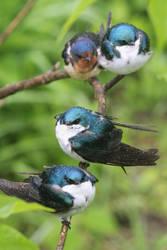 Four birds a perching. by sweatangel