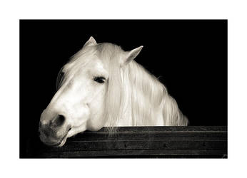 Unknown Horse II by Lorline