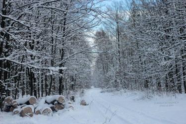 #winterforest by panna-poziomka