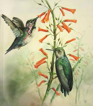 Hummingbirds watercolor study by sandara