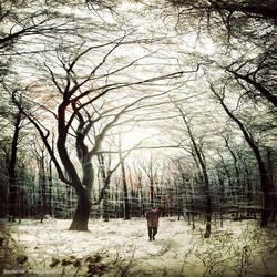 In The Woods II by BecherArt
