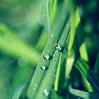 Just grass by Juchise
