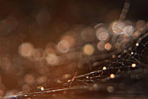 Bokeh web by Juchise