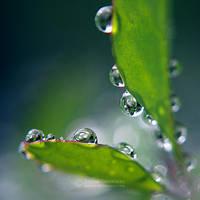 Rainy day II by Juchise
