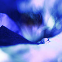 Blue by Juchise