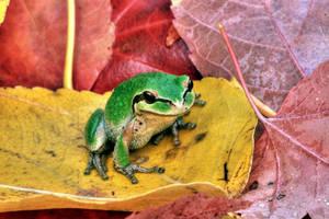 The Frog Prince by La-Vita-a-Bella